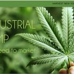 New publication: Industrial Hemp: From Seed to Market