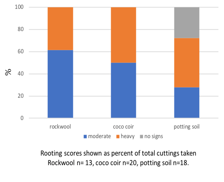 Bar graph showing the percent of each media that had no signs of rooting, moderate rooting, and heavy rooting