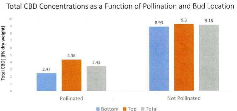 Graph showing how CBD production drops when a hemp plant is pollinated.