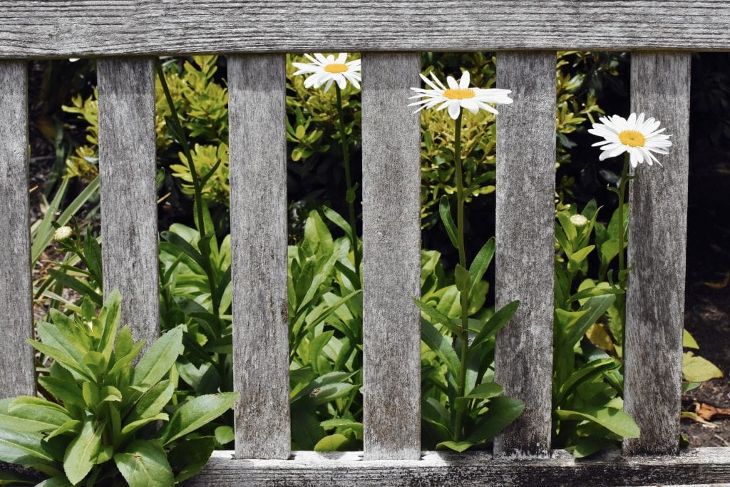 Photograph, green plants viewed through a gray wooden fence.