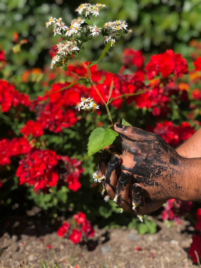 Photograph, two dirt covered hands planting a flower with many red flowers in the background.