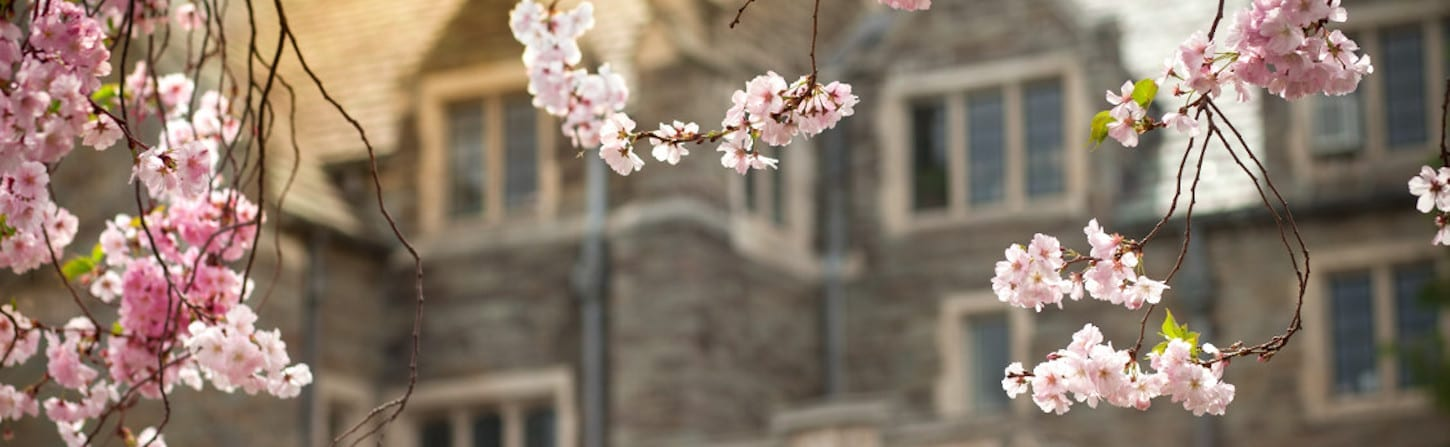 Photo of pink blossoms in front of Balch Hall at Cornell