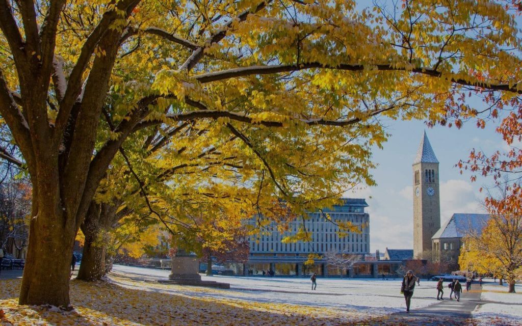 Photo of a tree with orange leaves, snow, and McGraw Tower in the background, by John Thavornwongwongse, submitted for the CIHF photo competition