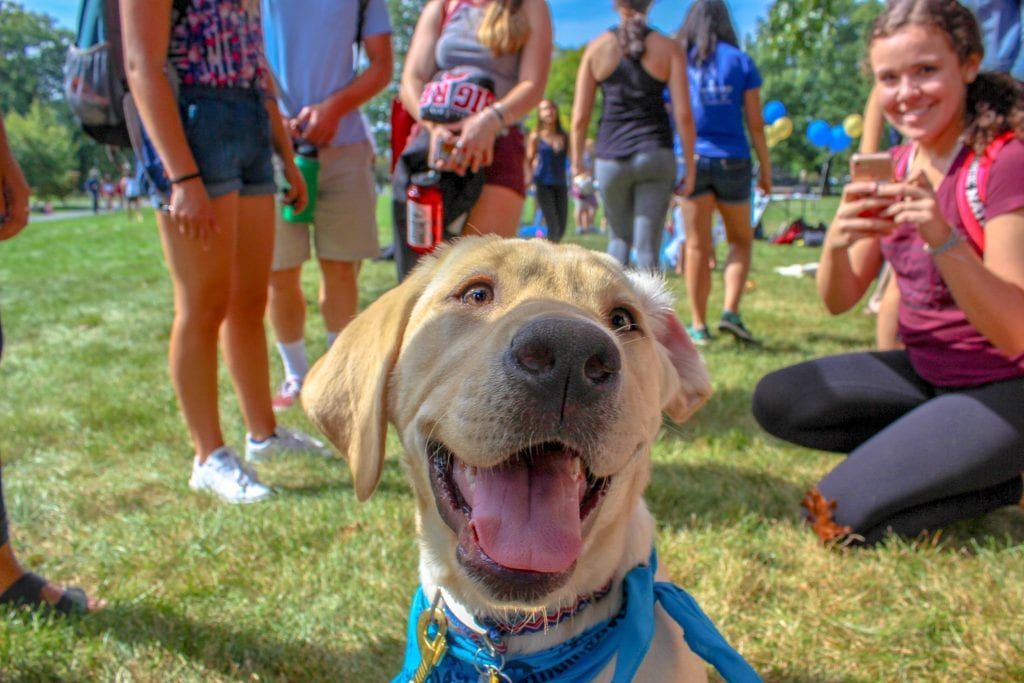 Photo of a happy dog surrounded by people, by Kyle Anthony Chrystal, submitted for the CIHF photo competition