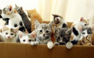 kittens_1687258c
