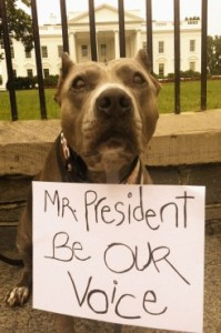 President dog