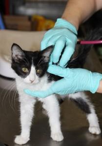 Examining kittens