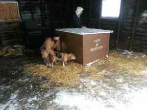 Dog house and straw donated by PAWS of Rochester