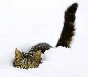 cat buried in snow