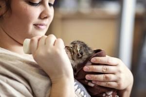 KittenNurseryUncroppedIMG_0608