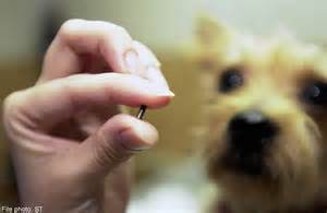 tiny microchip