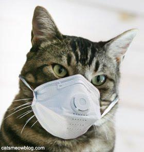 swine-flu-mask-for-cat-011813