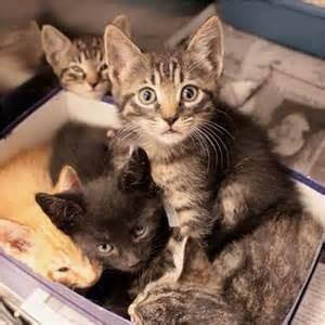 kittens looking confused