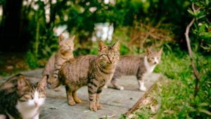 Image of stray cats from petdoctorvet.com.au