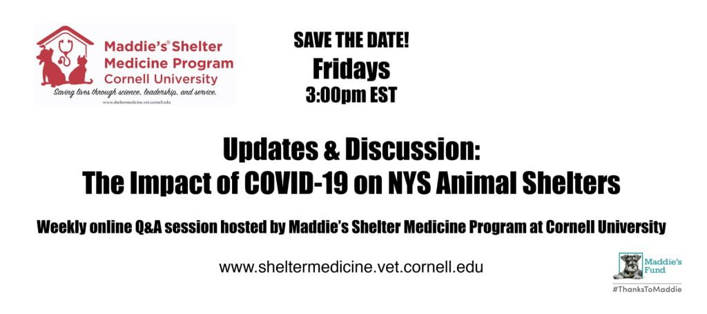 Poster for Friday COVID Q&As with CUMSMP