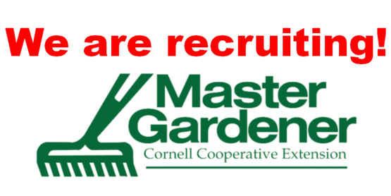 We are recruiting, with CCE Master Gardener logo and rake