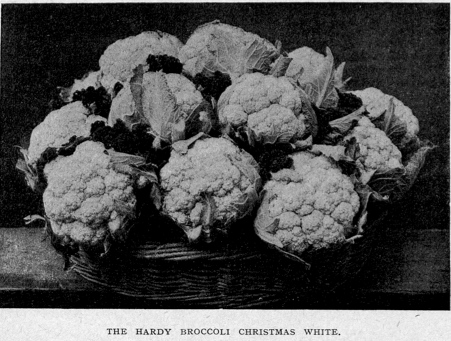 ChristmasWhiteBroccoli