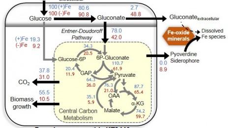 Nutrient-dependent cellular carbon fluxes