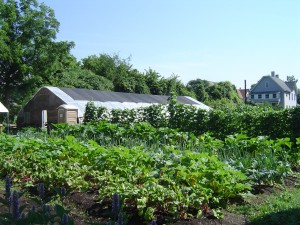 Binghamton Urban Farm.