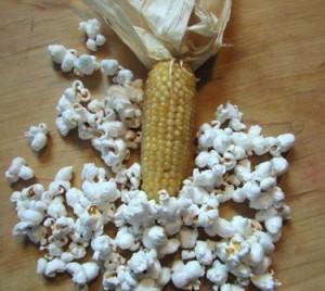 Cultivating- corn