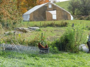Foggy Brook Farm hoop house
