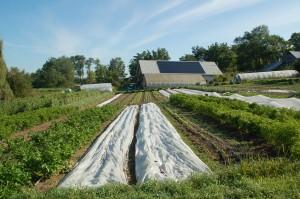 SmallFarmsUpdate- solar barn