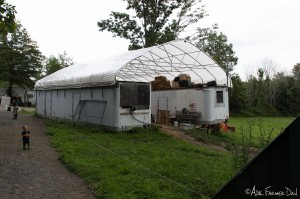 Two semi-trailers with a greenhouse canopy make up the barn and dairy.