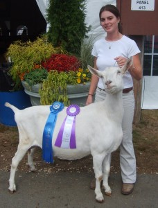 Miriah Reynolds showing her well bred Saanen.
