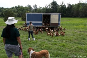 On poultry slaughter day, upwards of 150 chickens are processed in about 5 hours by a group of 6 people.