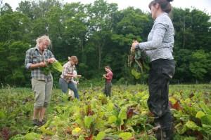 growing the next veg harvest