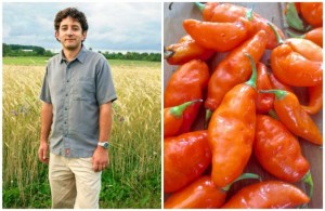 Michael Mazourek and his Habanada: the first truly heatless Habanero is full of rich, tropical flavor. Photo of Habanada by Matthew Goldfarb; photo of Mazourek from Cornell's EZRA magazine.