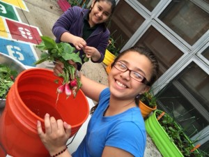 6th grade students, Lizbeth and Jessica, harvesting radishes in the garden.
