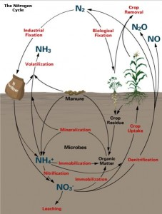 This is a representation of nitrogen cycling. (Agronomy Factsheet 2: Nitrogen Cycle, http://nmsp.cals.cornell.edu/publications/factsheets/factsheet2.pdf)