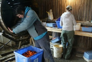 Brigitte Derel  and Katie Lavin work in Peacework packing shed. Photo courtesy of Craig Dilger
