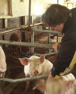 Bitta Albright scratches her sheltered pigs, that are now ready for market.