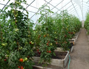 Growing Crops Indoors to Increase Resiliency; Rachel Erlebacher