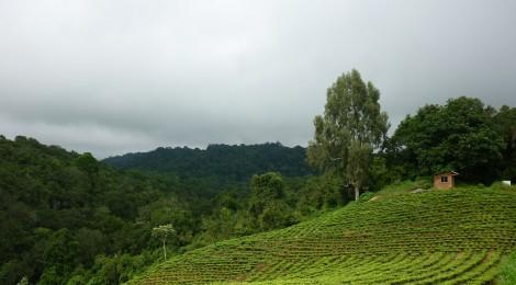 Testing a new market mechanism to support integrated landscape management: Landscape labeling