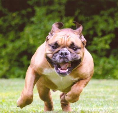 Sanner, Shawn Run!! Bee Gonna Get Me