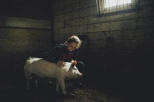 Girl with pig in barn