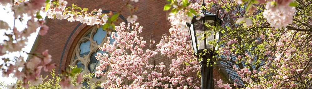 Trees in bloom outside Sage Chapel in spring. Credits: Jason Koski, Cornell University.
