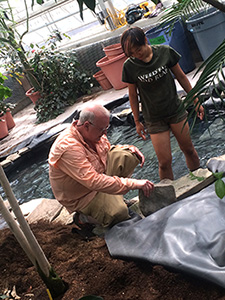 Conservatory curator Kevin Nixon and Plant Sciences major Patty Chan begin construction of waterfall.