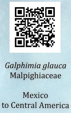 sample qr code tag