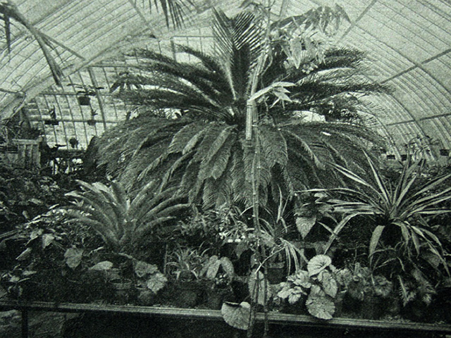 Sage Conservatory palm house interior.