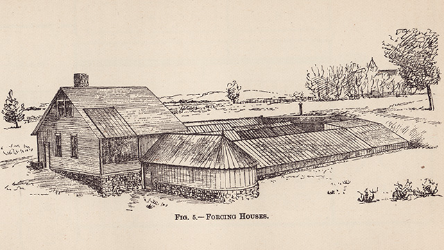Artist's rendering of Forcing Houses.