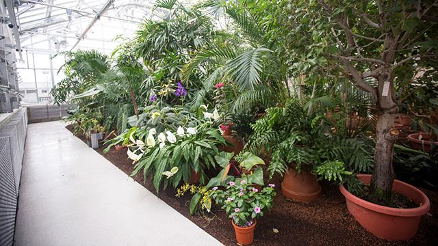 Palm Room 2916