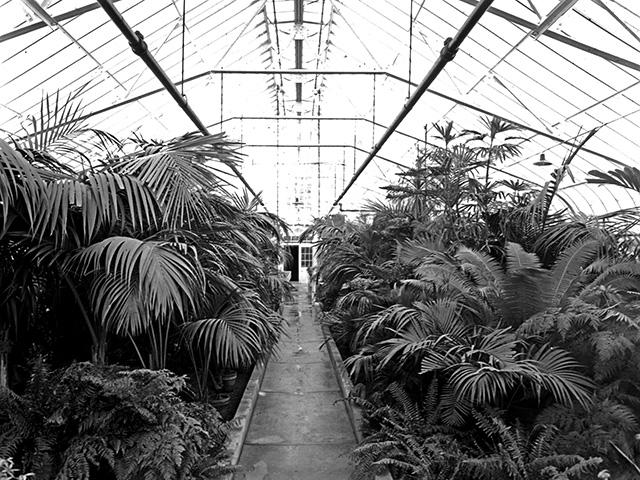 LHB palm room 1931