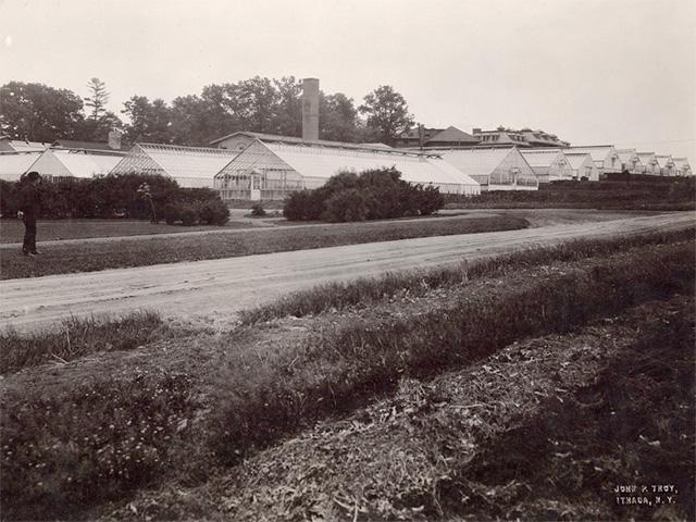 Plant Science range c.1918