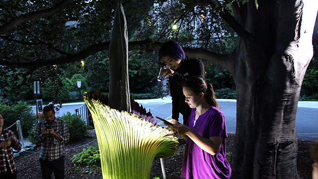 Capturing images inside the spathe.