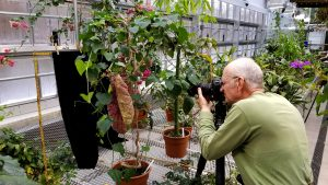 Cayuga Nature Photographers group member Paul Schmitt composes a shot in the Conservatory February 10.