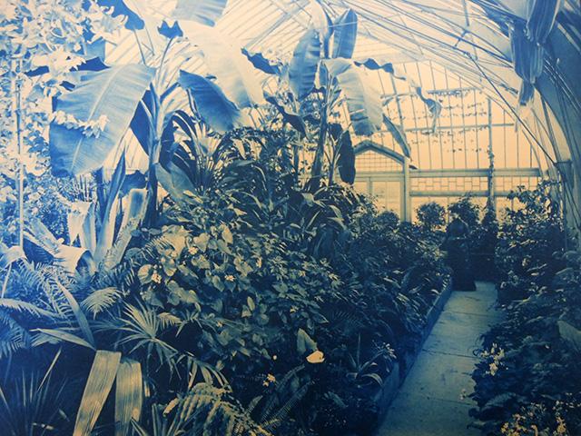 sage conservatory